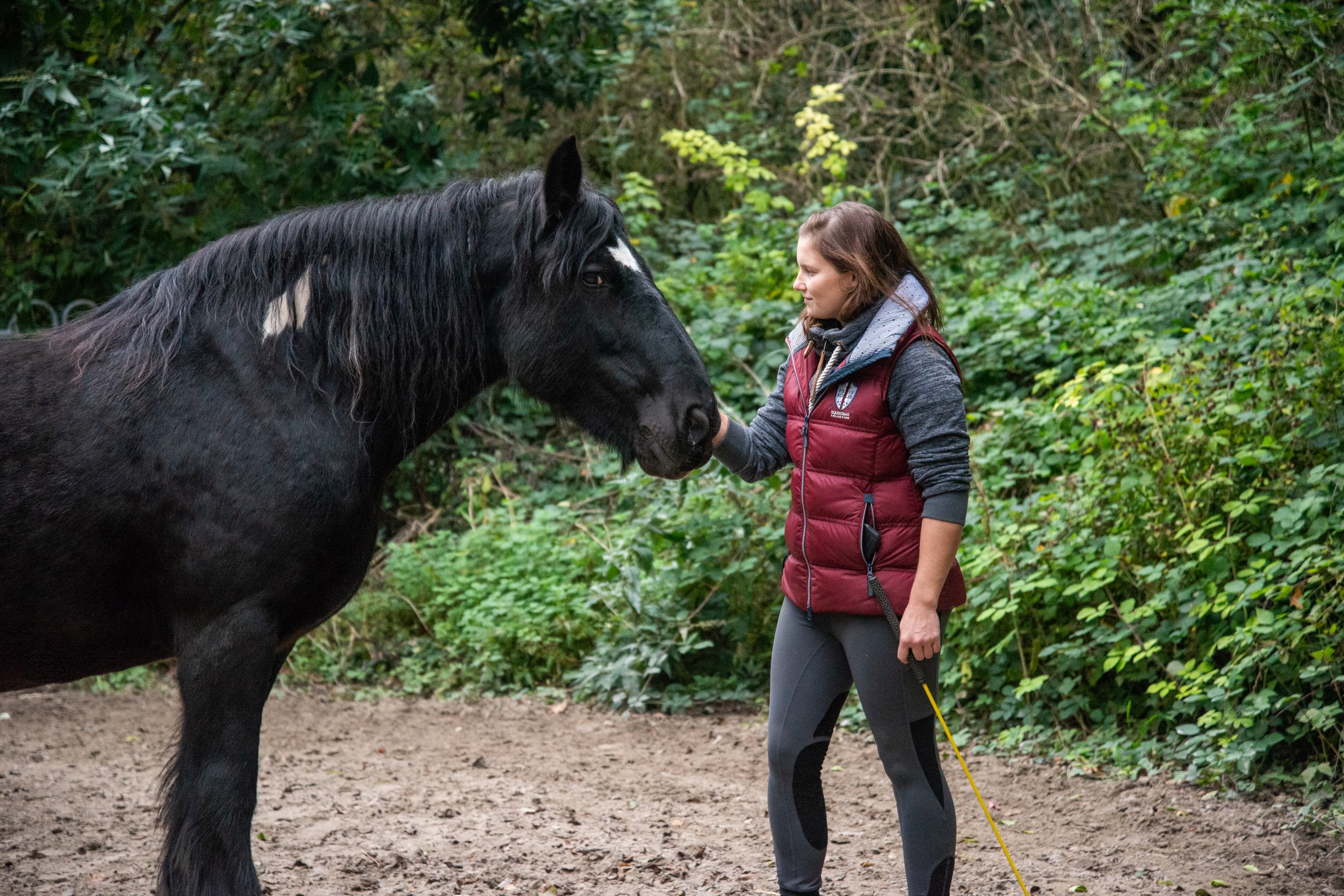 Tierheilkunde fürs Pferd